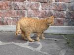 Katzen Streu Testsieger