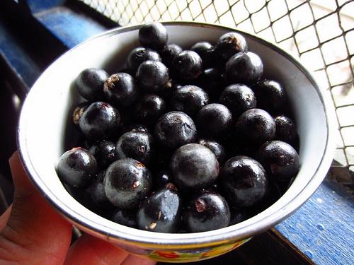Acai-Beeren im Test: abnehmen mit Kapseln?