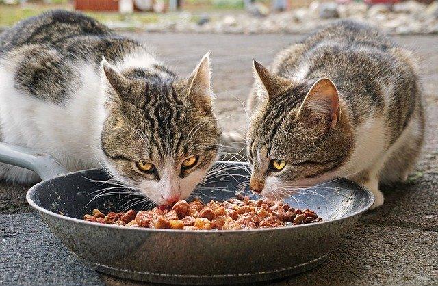 Das richtige Katzentrockenfutter kaufen: Gesundheit geht vor
